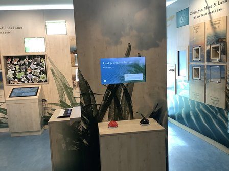 Nationalpark-Quiz in der Ausstellung Nationalparkhaus Hiddensee Vitte